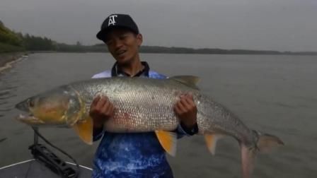 钓鱼: 相信绝大部分的钓鱼人都没有钓过这么大的鱼!
