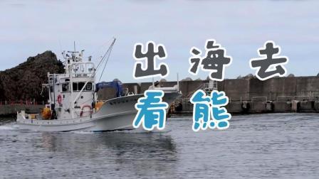 跟狐狸咖啡屋的老板出海看熊和鲸鱼, 领略峡湾美景 马叔日本
