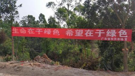 广东省东升农场党建生态林(2018年3月)