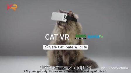 猫咪专属VR? 维多利亚动物园研制撸猫神器, 真·活得不如猫系列
