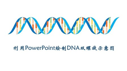 Powerpoint绘制DNA双螺旋示意图