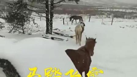 重庆4月飘雪见过吗? 这几天是春夏秋冬轮回转啊