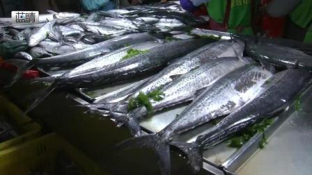 青岛: 一米长大鲅鱼吸睛 女婿们快备好腰包