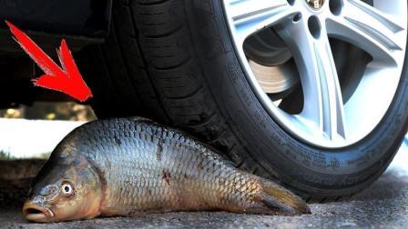 汽车碾过鱼的瞬间发生了什么? 这画面太劲爆了, 让我永生难忘