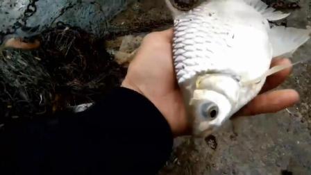 钓鱼: 大河边上打了一网, 够吃就回家!