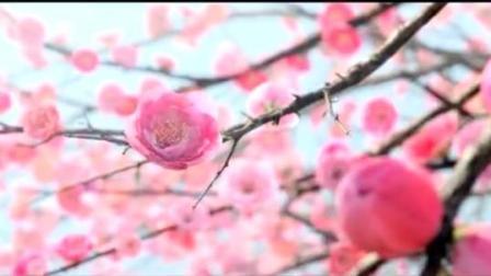 三生三世十里桃花混剪还是张杰的歌, 但这么搭配很美!