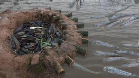 农村小哥, 用10根鲜竹子大摆捉鱼阵法, 洒上白米饭, 鱼儿纷纷往里钻