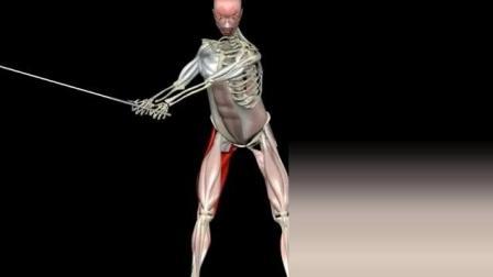 来看看高尔夫挥杆过程中的肌肉变化