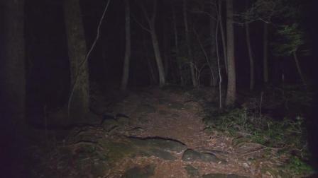 深夜漫步日本青木原森林