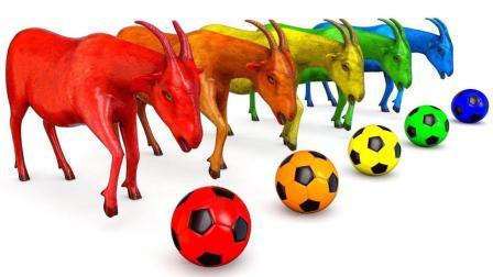 儿童学英语 颜色足球球 形状山羊动物 卡通童谣 儿童玩具视频 【 俊和他的玩具们 】