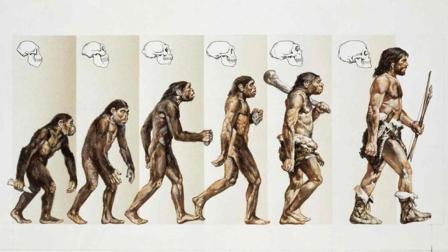 人类是由猿猴进化而来的, 那些进化失败的猿猴, 最后变成什么了?