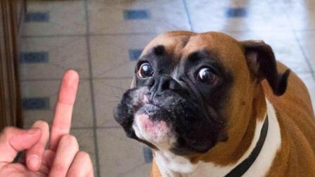 老外作死朝狗狗竖中指, 下一秒狗狗的反应亮了!