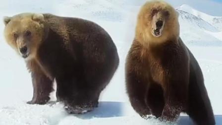 人和熊之间的生死对决, 差点悲剧收场