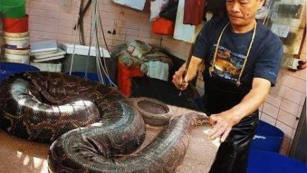 养到200多斤的巨蟒, 国外人最后却这样对它, 悲催!