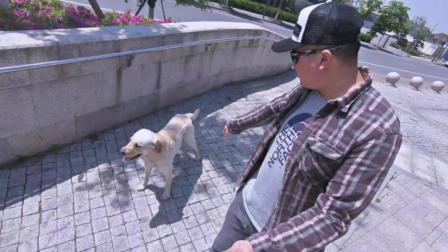 跟随是每只狗狗都应该学会的基本要领。