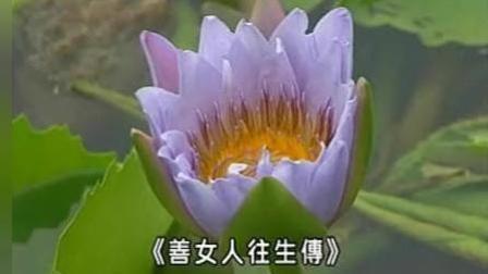 善女人往生传(012集-013集)--信愿法师