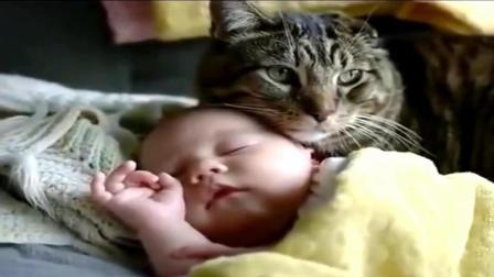 宝宝与猫咪共处一室, 结果发生了这一幕, 没想到你是这种猫