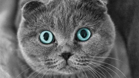 探访猫咪杂技团 想不到平时高傲冷艳的喵星人也有这样的绝活这 就是搞笑