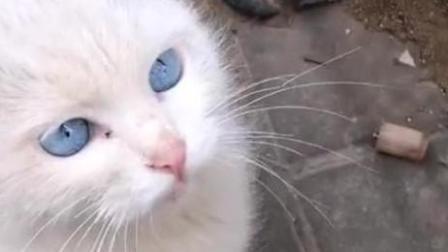 好心人遇到一只流浪貓, 給它買了吃的跟水, 當它抬頭的一瞬間被它的眼睛驚呆了