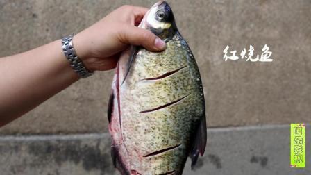 阿朵影视.红烧鱼的正宗做法, 鱼怎么也煎不烂, 开胃下饭