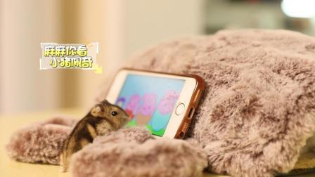 这是我见过最搞笑的仓鼠了, 写作业也开小差?