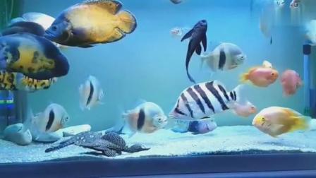 家居水景丨一缸让你垂帘欲滴的观赏鱼, 个个堪称极品