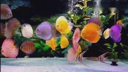 家居水景丨超漂亮的公主七彩神仙观赏鱼
