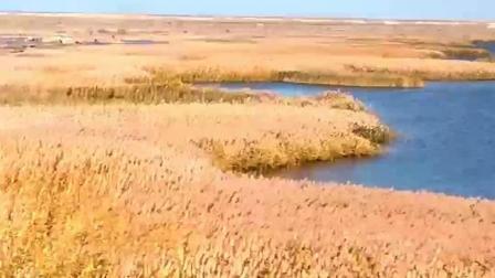 新时代 新家乡 穿越内蒙古自治区·阿拉善盟·额济纳旗 沙漠胡杨
