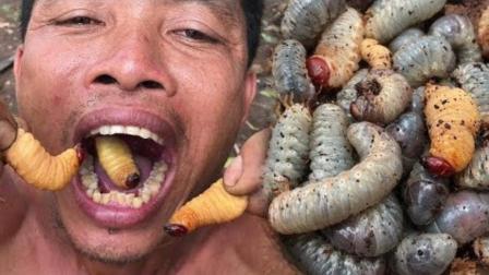 野外生存之美食: 大叔腐树里挖出许多肉虫, 就这么给吃掉了