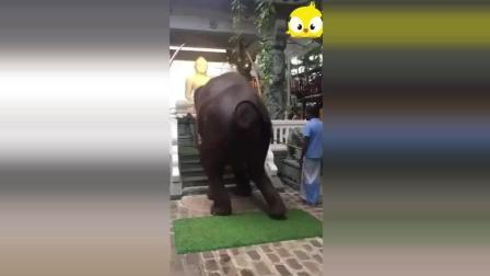 【动物念佛拜佛灵性奇闻】会拜佛的大象, 你见过吗? 我是第一次见