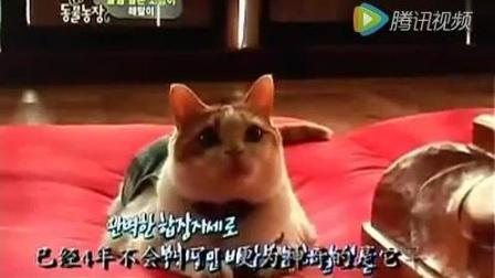 【动物念佛拜佛灵性奇闻】一只会流泪的猫入佛门, 竟吃素4年天天拜佛感动千万网友!