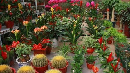 花卉市场的这三个套路, 以后一定要注意!