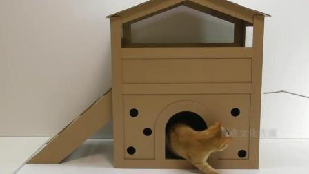 超有爱的铲屎官, 用纸板给猫咪建房子, 网友: 过的比我幸福