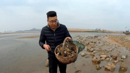 渔村小伙赶海捡生蚝, 不到一小时捡到30多斤, 心里乐开花!