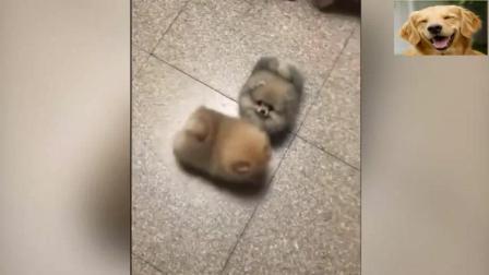 乍一看还以为两只拖鞋, 仔细一看是两只可爱的小狗狗!