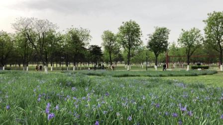 春游好去处, 大明宫国家遗址公园春色满园