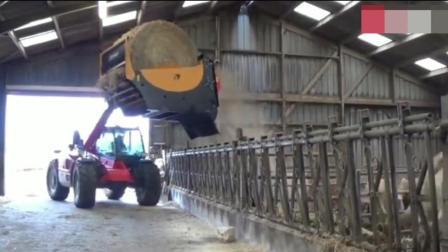 德国的机械不是一般的强, 喂牛的过程看得好过瘾!