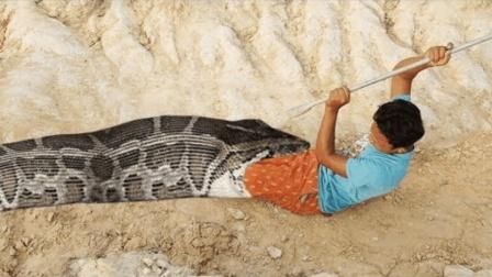 5米长的大蟒蛇, 被柬埔寨小孩给撞上, 两下就给擒获了