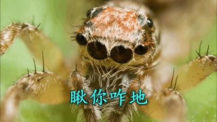 【第五人格】蛛蛛这么可爱干嘛要怕蛛蛛