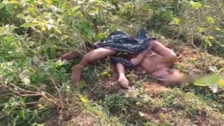 印度野象乱闯农田 将70岁老农活活踩死