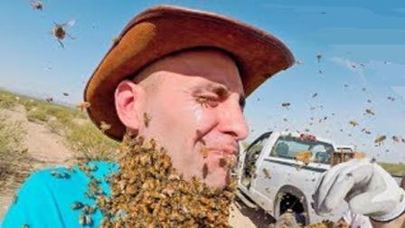国外作死小伙挑战蜜蜂胡子, 最后嘴巴竟被叮成了腊肠, 尴尬症都犯了