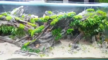 7天造景 4米水草缸