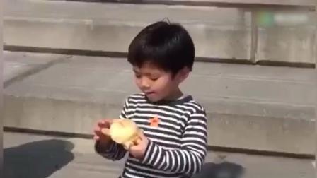 小乌龟面包被海鸥抢了 太搞笑了