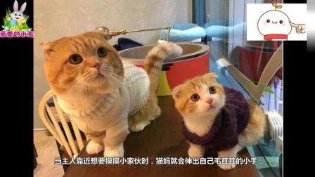 母猫生完小猫后性情大变, 喵: 看什么看, 休想打我女儿的主意!
