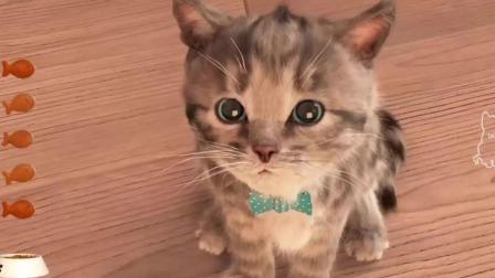 猫咪搞笑视频笑死人不偿命 网上很火的萌猫咪