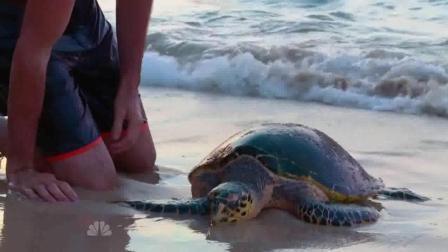 贝爷的孤岛求生, 遇到一只垂死的海龟, 做法感人啊!
