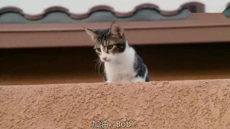 《邻家特工》成龙在下面打的正激烈, 小猫咪在楼顶观战
