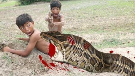 贪吃蛇为了吃到食物, 踏入了男孩的圈套, 难逃厄运!