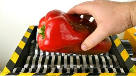 把超大红辣椒扔到碎纸机里, 会发生什么事?