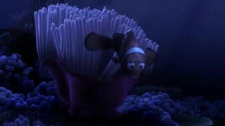 海底总动员 海底遭鲨鱼攻击 丑鱼妈妈变腹中餐